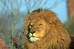 J78A1382 (M0JRA) Tags: wildlife parks doncaster people visitors animals lions tigers cats keepers
