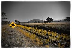 Track crossing ahead (John Panneman Photography) Tags: williamsdale act nsw actnswborder farm rural sheep train rail track sign crossing australia monaro panneman nikon d610 cooma bombala queanbeyan