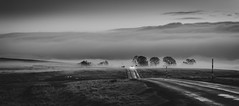 Into the Fog, Crawleyside Bank (Durham Stephen) Tags: bw monochrome durham foggy stanhope weardale sonya7iii