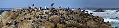 A Gathering (Doug Santo) Tags: seagulls seascape landscapephotography pacificgrove