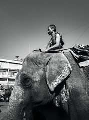 Elephant keeper (bobbypoint) Tags: animal animals antique art asia asian atmosphere auspicious beautiful belief crafts culture decoration descend elephants festival fun handmade happiness happy heritage history importantday joy laymen local mammal meditation molding oneintheworld orange ordain parade people perspective religion ride riding surin thai thailand tourism traditional transport travel watch year
