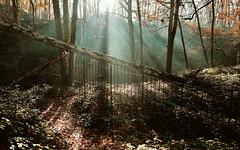Old and forgotten location - Steendorp - Belgium (roland_tempels) Tags: steendorp belgium nature naturereserve sun supershot green forrest oldandforgotten trees sunlight