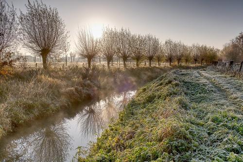 Frosty Morning light