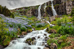 The Waterfall In Seydisfjordur Iceland (PIERRE LECLERC PHOTO) Tags: iceland seydisfjordur town village scenic flowers lupines picturesque mountains green waterfalls cascades summer travel eastfjords icelandicadventure exploreiceland landscape pierreleclercphotography