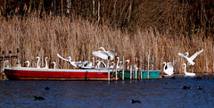 Waiting for the Ferryman! (Patricia Buddelflink) Tags: egrets winter lake nature bird