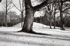 A walk with my Beltica (Geir Bakken) Tags: beltica 135 135film analog analogphotography analogue film filmisnotdead filmphotography filmcamera filmisalive filminotdead blackandwhite bw tree lansdscape winter vintagecamera carlzeissjena tessar