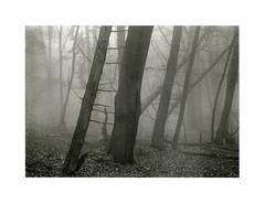 Foggy Morning (Wolfgang Moersch) Tags: fp4 tanol platinumpalladium hahnemühleplatinumrag