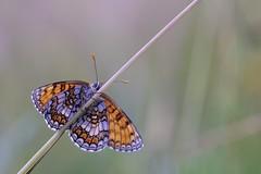 papilllon (jpto_55) Tags: papilllon proxi bokeh hautegaronne france xt20 fuji fujiflim kiron105mmf28 kironlens