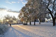 11/11 2019. (johnerlandaxelsson@gmail.com) Tags: gimo uppland sverige vinter natur landskap landscape omanipulerad nolightroom nophotoshop johnaxelsson