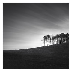 Head West! (Marco Maljaars) Tags: longexposure dutch le blackandwhite marcomaljaars monochrome minimalism sky mood landscape light bw netherlands silence wood tree dune dunes bergen bergenaanzee