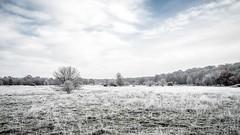 Winter Morning (blende9komma6) Tags: winter morning wintermorgen ice eis landschaft landscape natur snow schnee hannover südstadt germany xmas weihnachten himmel heaven sky nikon z6 countryside nikkor kalt kälte frozen gefroren cold