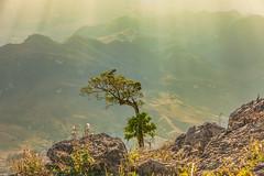 _J5K8740.0110.Tà Số.Chiềng Hắc.Mộc Châu.Sơn La (hoanglongphoto) Tags: asia asian vietnam northvietnam northwestvietnam northernvietnam landscape scenery vietnamlandscape vietnamscenery mocchaulandscape mocchauscenery nature natureinmocchau afternoon afternoonsunshine sunny sunshine tree mounatin mountainouslandscapeinvietnam flanksmountain ray rays sunray canon canoneos1dsmarkiii tâybắc sơnla mộcchâu chiềnghắc tàsố phongcảnh phongcảnhmộcchâu thiênnhiên thiênnhiênmộcchâu buổichiều nắng nắngchiều sườnnúi cây canonef70200mmf28lisusm