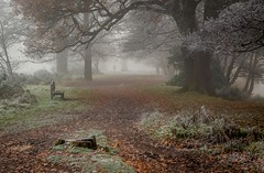 Through the mist (TonyW13) Tags: mist fog landscape winter cold wollaton nottingham