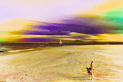 It's Going to be a Day Today (tom_roche21) Tags: trailerdog vilanoinletflusa staugustineflusa colorizedinfared seascape danfogelberg tothemorning digitalpainting exotica junkyardhearts hat is good guess meanwhileinflorida