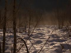 per tutti (Giorgio___) Tags: gratis forfree regalo nebbia neve snow schnee alberi ombra sole ciclabilesancandidolienz nebel olympus osttirol österreich oly43 olympusm14150mmf4056 dolomiti dolomiten sillian giorgio morgennebel