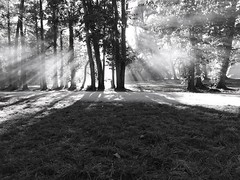 Magic Forest (Solista*) Tags: poland polska las forest black white bw czarny biały czarnobiały nature natura trees grass gray magic light landscape krajobraz biskupin journey trip shadow dark