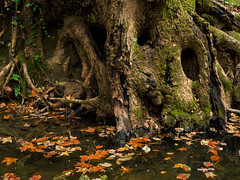 Creek roots (Thomas Cizauskas) Tags: brook park autumn tree creek georgia stream roots decatur riverbank naturepreserve urbanpark