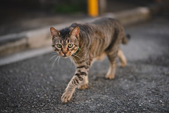猫 (fumi*23) Tags: ilce7rm3 sony sel85f18 street a7r3 animal alley emount 85mm fe85mmf18 feline cat chat gato neko bokeh ねこ 猫 ソニー