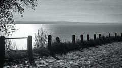 (zedspics) Tags: balaton badacsony bw blackwhite magyarország monochrome hungary hongarije ungarn zedspics landscape lakescape 1911 explore explored