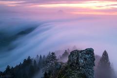 Fog wave at dawn - Belchenflue (Captures.ch) Tags: fog nebel clouds wolken sunrise sonnenuntergang morning morgen morgendämmerung dawn herbst fall autumn schweiz swiss belchenfluh solothurn switzerland tree valley wald stone stein sky landschaft landscape hügel himmel hill baum aufnahme capture