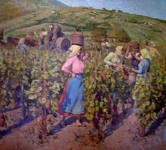 Grape Harvest in Vrsac (Sabri KARADOĞAN) Tags: vintage weinlese vrsac srbija serbien serbia vojvodina grozdje berba grozdjebal berbagrozdja trauben pajajovanovic wein vino vine