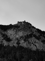 Hohe_Wand_2019_19 (rhomboederrippel) Tags: rhomboederrippel fujifilm xe1 july 2019 europe austria loweraustria hohewand maiersdorf alps alpen hiking mountain forest sunny bw monochrome tree rock calcareous