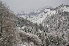 Mountain forest in snow (echumachenco) Tags: winter december snow tree forest valley mountain mountainside cloud
