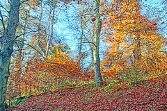 Autumn time (Adrian Walker.) Tags: elements autumn leaves trees scotland gold yellow canon80d tamron18270 landscape