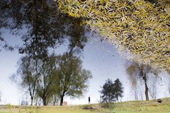 L'automne en coup de vent (Fabien Husslein) Tags: eau water reflection reflet paysage landscape autre monde mirror autumn fall automne