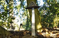 Ich stehe noch (KaAuenwasser) Tags: spechttintling pilz pilze makro nah schlossgarten karlsruhe licht schatten strauch tropfen morgen november dezember jahreszeit lichter pflanzen natur herbst laub