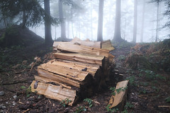 Wood (Role Bigler) Tags: baum emmental fujifilmclassicneg fujifilmxpro3 fujinonsuperebcxf23mm114r fujinonxf23mm114rf14 holz mist natur nebel tree fog foggy forest forst holzschlag misty nature schweiz stackofwood suisse svizzera switzerland wald wood