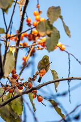 191201 Donosaka Park-07.jpg (Bruce Batten) Tags: animals birds donosaka honshu japan locations machida parks plants reflections subjects tokyo trees vertebrates wild