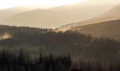 Early Morning Mist Wicklow (kckelleher11) Tags: 2019 40150mm ireland olympus december early em1 f28 forest mist morning sunlight trees wicklow yellow