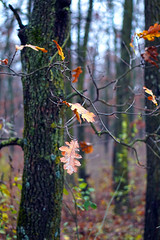 Late autumn in the forest (Dumby) Tags: landscape ilfov românia forest autumn fall nature colors outdoor