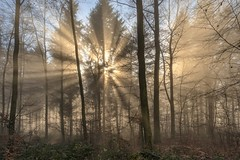 *Advent light* (Albert Wirtz @ Landscape and Nature Photography) Tags: albertwirtz advent adventlight adventslicht forest wald tree baum nature natur natura naturaleza sun sonne sunlight sunrays sonnenstrahlen sonnenspot nebel fog mist nebbia laniebla brume bruma brouillard misty foggy neblig nikon d810 fineart fineartphotography landscapefineart naturefineart moseleifel südeifel eifel eifelwald eifelsteig hupperath minderlittgen wittlichland germany allemagne deutschland rheinlandpfalz rhinelandpalatinate beechforest buchenwald