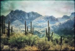 Doin' the saguaro slide (Chuck Pacific AKA Chuck Tofu) Tags: hss saguaro cactus catalinastatepark tucson arizona sentinel snapseed formulasapp shadowsandlight