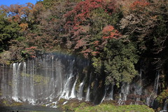 The best time to see the autumn foliage in Japan is from mid-November to mid-December. (ULTRA Tama) Tags: the best time see autumn foliage japan is from midnovember middecember tourism tourist travel traveling trip mytravelgram travelgram instatravel mtfuji mtfujiwhc shizuoka fuji todays dayliphoto instadaily photogenic worldcaptures flickrfriday 2019 worldheritage photography beautifulworld allthingsofbeauty photooftheday picoftheday moment peaceful calm quiet tranquil stillness peace beautifulmoment wanderlust ftimes flickrheroes brilliant flickr celebrities natural decay macro mondays canonflickraward flickrelite flickrunitedaward estrellas world heritage foto art yjcp relaxing relaxed relaxtime chilling timetochill