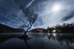 Lone Tree (Rob Pitt) Tags: lone tree lyn padarn wales north llanberis lake night moonlit light painting torch lit sony a7rii november 2019 long exposure hss