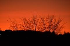 Photo of Sunset Trees