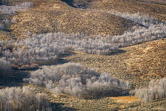 Waiting for Winter  -  Mono County, California (2019) (David L. Hoffman) Tags: conwaysummit aspens trees sage hills texture easternslope sierranevada monocounty autumn