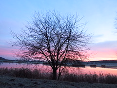Baum (germancute) Tags: outdoor nature landscape landschaft thuringia t germany germancute deutschland tree thüringen baum teich