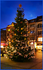 Adventszeit in Friedenau (magritknapp) Tags: weihnachtsbaum christmastree arbredenoël árbolnavideño árvoredenatal alberodinatale kerstboom choinka