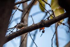 191201 Donosaka Park-06.jpg (Bruce Batten) Tags: animals birds donosaka honshu japan locations machida parks plants reflections subjects tokyo trees vertebrates wild