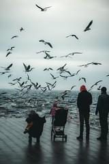(Nika Watson) Tags: ukraine odessa одесса sea beach ланжерон november winter cold film camera 50mm canonukraine capture moments people birds boy girl photographer photography seagulls blacksea water