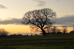 Winter's Eve (Mike.Dales) Tags: autumn winter tree landscape eastharlsey northyorkshire yorkshire england field