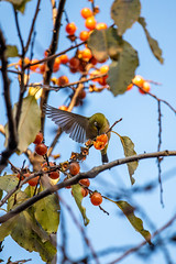 191201 Donosaka Park-08.jpg (Bruce Batten) Tags: animals birds donosaka honshu japan locations machida parks plants reflections subjects tokyo trees vertebrates wild