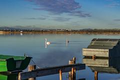 _DSC8070 (DMANOU) Tags: animaux flamantsroses france herault maguelone occitanie oiseaux