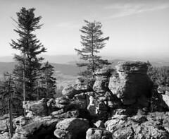 Ödriegel (str.ainer) Tags: ödriegel bayersicherwald bavarianforest mamiya rb67 sekorc90mm ilford fp4 adox fx39