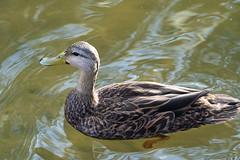 SouthPadreIsland_279 (allen ramlow) Tags: south padre island birding center nature park texas tx birds sony alpha