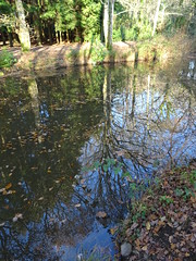 Reflections at Stover Country Park Devon (guyfogwill) Tags: 2019 autumn autumncolours color colour countryside devon fogwill gb gbr guy guyfogwill jamestempler lake leaves november reflection reflections southwest spectacular stover stovercountrypark teigngrace teignbridge theshaldives tree trees uk unitedkingdom water wetreflection woodland flicker photo interesting absorbing engrossing fascinating riveting gripping compelling compulsive beach vacances sea ocean